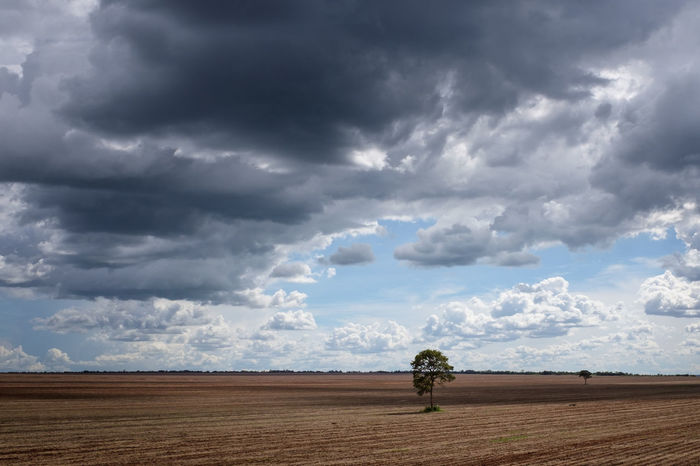before it turns green Agriculture Cloud - Sky Day Field Landscape Outdoors Planting Planting Seeds Soybean Tree