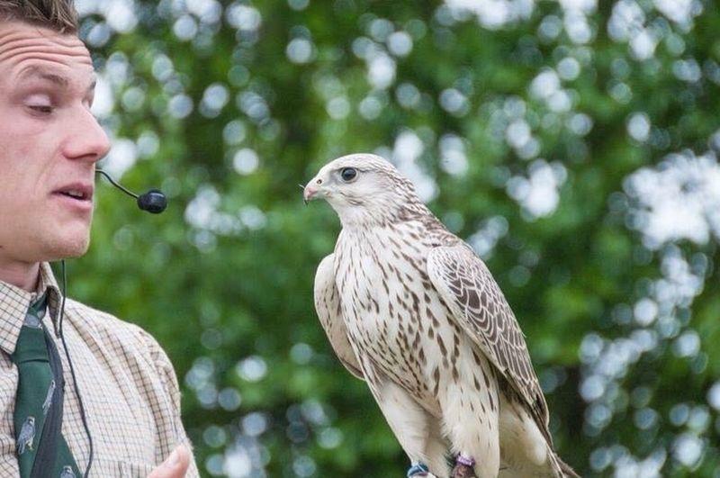 falconry show😊 Birds Bird Bird Photography Taking Photos Animals Cute Vscocam Wildlife Photooftheday