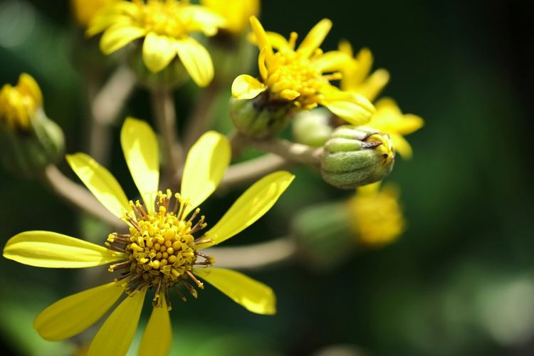 Close Up Of Yellow Flowers