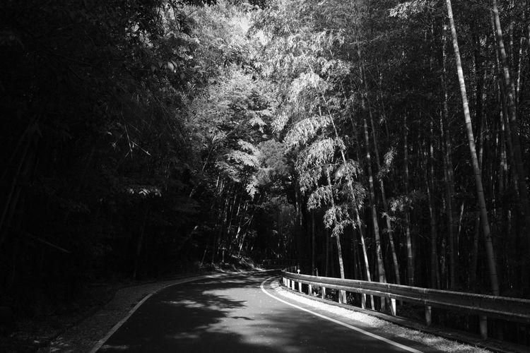 Road Tree The