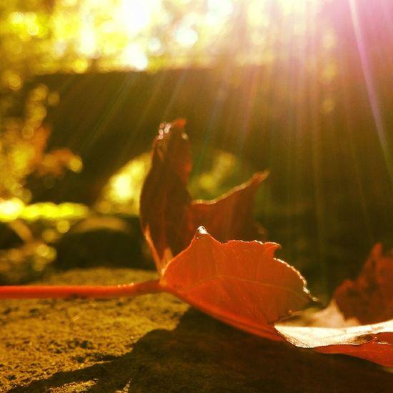 TakeoverContrast The Week On EyeEm The Week On EyeEm Perspectives On Nature