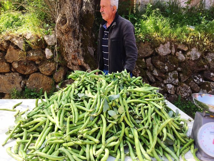 Fresh fava beans Vegetable Healthy Eating Man Standing One Man Only Selling On The Street The Place I'm Now