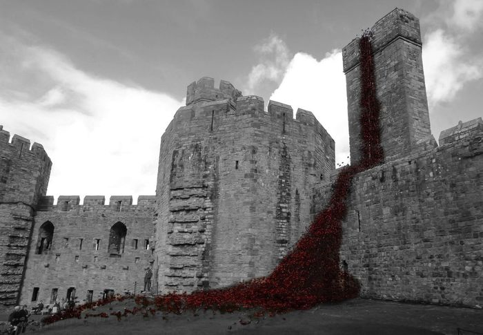 Architecture History Low Angle View Sky Old Tourism Poppies  Weeping Window Caernarfon Castle Remembrance Blackandwhite Colourpop