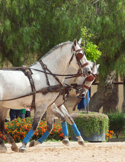 Horse cart by plants