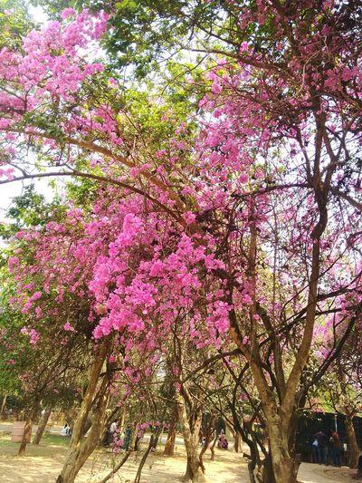 Sunnyday☀️ NATURELOVE💙 Flowerpower Nature Colors
