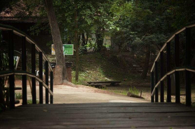 Empty footbridge along trees in forest