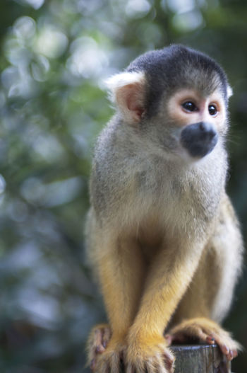 Close-up of monkey looking away