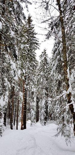 Nature Landscape Tree Snow Cold Temperature Winter Forest Pinaceae Mountain Sky Ski Lift Ski Track Ski Resort  Skiing Ski Holiday Ski Pole Powder Snow