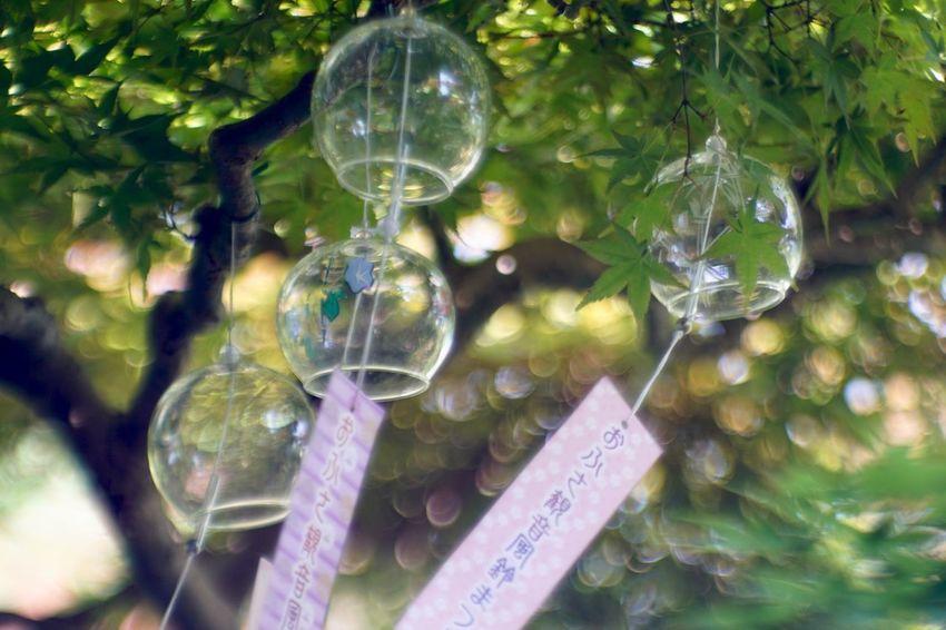 Japanese wind chime .•*¨*•.♬ 奈良 風鈴 おふさ観音 Nara Japanese Garden Japanese Culture Jupiter9 Bokeh Vintage Lens Bokeh Photography Japan Glass - Material Close-up