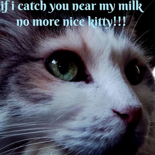 Tagsforlikes TagsForLikesApp Tags Of Cats Tags For Eyeme Cats Of EyeEm Catslife Cat Lovers I Love Cats Eyeme Cats Cat♡