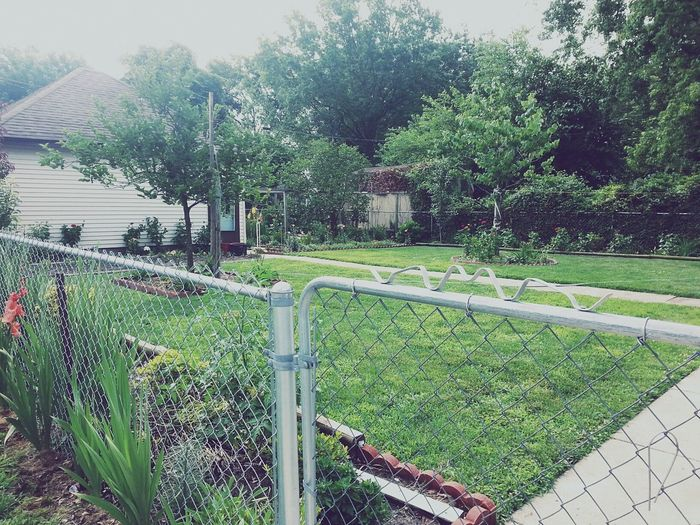Backyard Fence Tree No People Green Color Growth Outdoors Day Garage Flowers