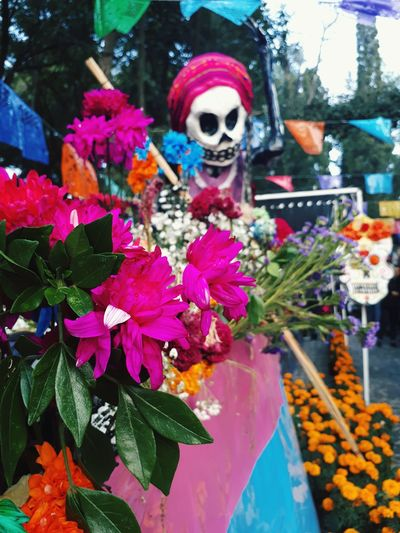 Flower Multi Colored Outdoors Day Nature Freshness Fragility No People Flower Head Catrina Catrina Day Of The Dead Catrinas Catrinamakeup DIA DE MUERTOS Dia De Muertos México Dıa De Muertos Dia De Muertos. Tepotzotlan Altar De Muertos