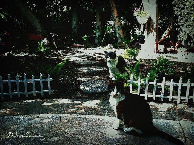 Cats HDR Eye4photography  Eye4enchanting
