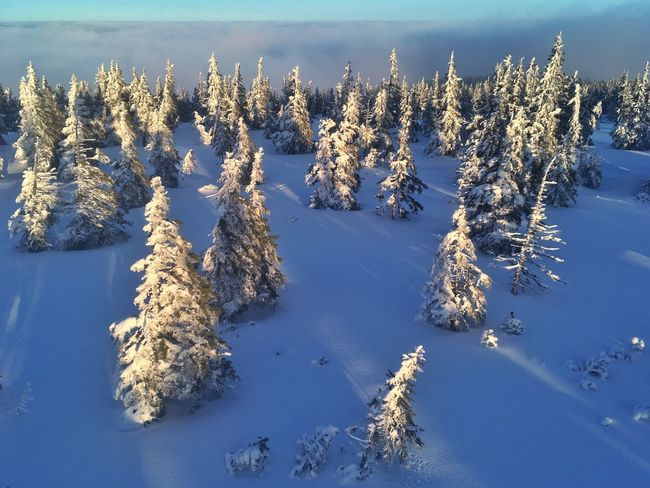 In the mountains Winter Cold Temperature Snow Nature Tranquility Tranquil Scene Beauty In Nature Scenics Frozen Outdoors Landscape Weather No People White Color Day Tree Mountain Field Sunlight Sky Go Higher