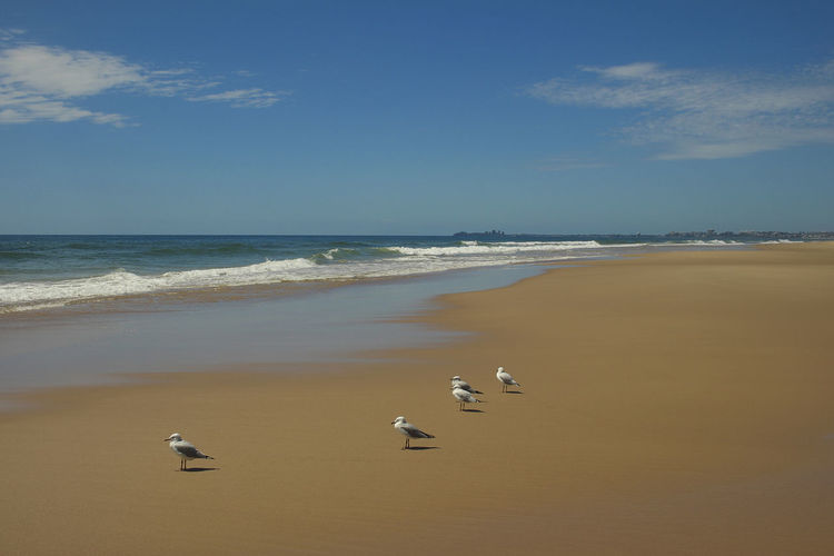 Sea Water Animal Themes Animal Bird Animal Wildlife Beach Vertebrate Animals In The Wild Land Group Of Animals Horizon Horizon Over Water Sky Nature Beauty In Nature Scenics - Nature Motion Day No People Seagull Outdoors Australia