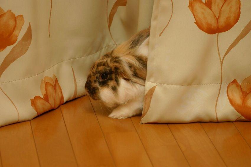 Hi :) Rabbit Bunny Pet Rabbits