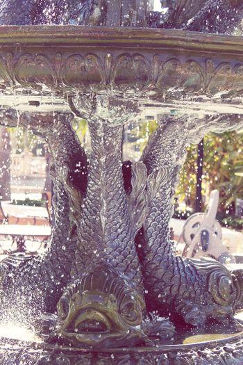 Fish Fisheye Fountain