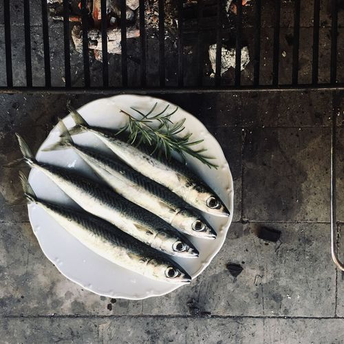 High angle view of fish on plate