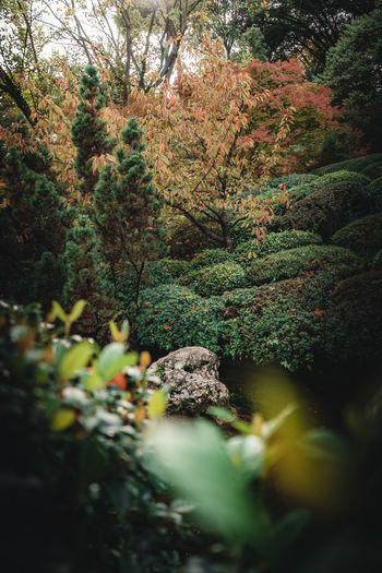 Plants and trees in forest