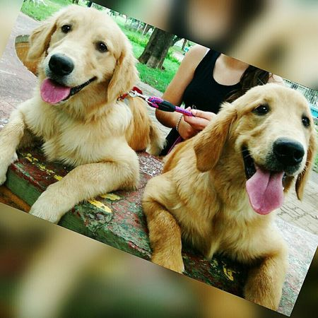 Pets Dogs Hello World Friends Sisters Pic Relaxing Taking Photos Gif muy lindas