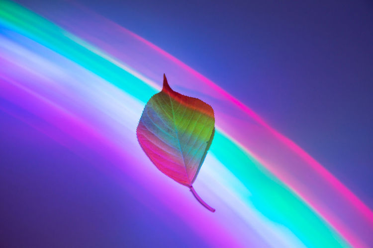 Multi Colored Colored Background No People Close-up Rainbow Leaf Plant Part Single Object