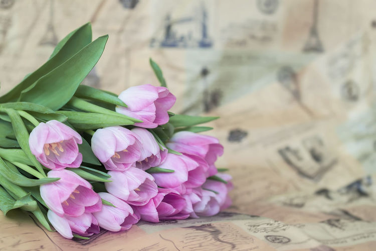 Soft tender background of pink tulips with dew. Spring flowers, abstract romantic pastel floral background Dew Easter Easter Ready Pink Romantic Soft Valentine Valentine's Day  Bouquet Close-up Dew Drops Drop Floral Flower Fragility Pastel Pastel Colors Petal Pink Flowers Seasons Spring Spring Flowers Tender Tulip Water