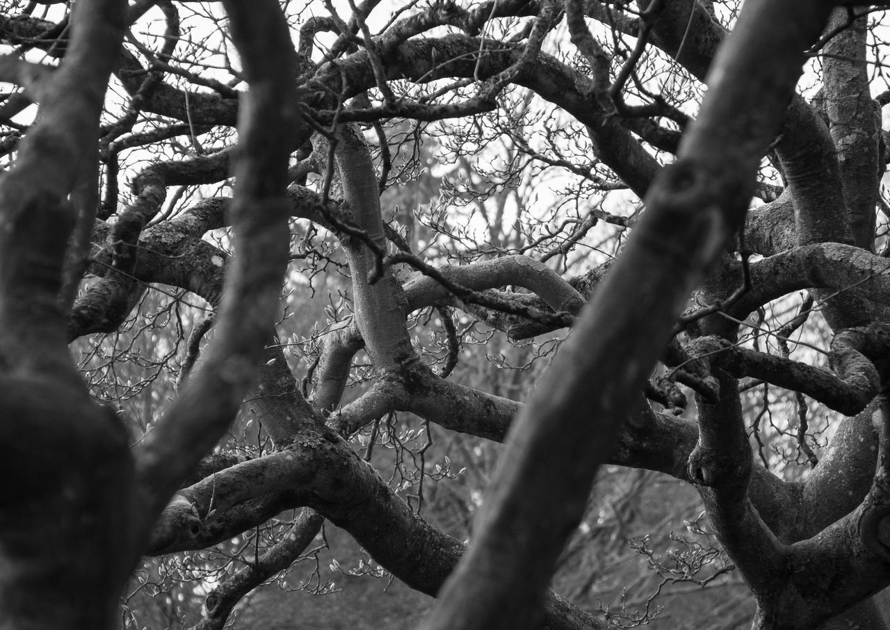 LOW ANGLE VIEW OF TREE BRANCHES IN FOREST