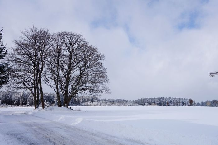 Minus 10 Snow Cold Temperature Sky Winter Weather Tree Nature Bare Tree Tranquil Scene Cloud - Sky Tranquility Scenics No People Beauty In Nature Day Landscape Outdoors Königsfeld Black Forest