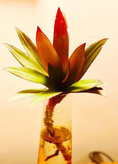 Plant Close-up Fragility Leaf