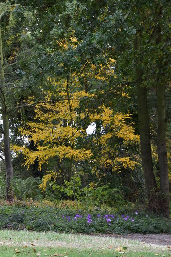 Autumn Autumn Colors Beauty In Nature Beth Chato Gardens Close-up Day Elmstead Market Essex Fall Flower Growth Nature No People Outdoors Scenics Tranquil Scene Tree Water