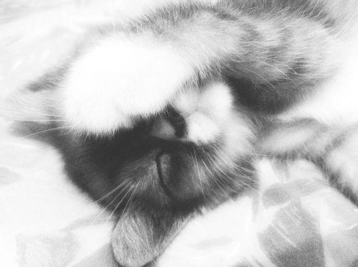 My Cat Babycat ❤ My Kitties  Black And White