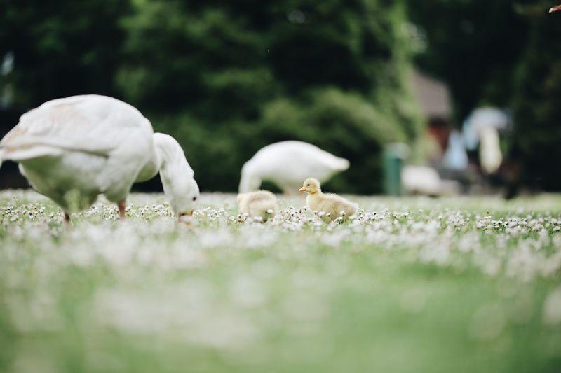 Close-up of birds on grassy field