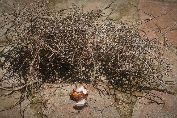 a life never lived... Birds Egg Broken Egg Death Egg Yolk End Of Life South Africa Bird Broken Broken Egg On The Floor Close-up Eggshell Fallen Hatchling Nature Nest Ornithology