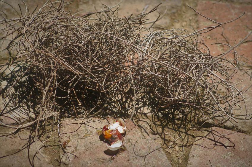 a life never lived... Birds Egg Broken Egg Death Egg Yolk End Of Life South Africa Bird Broken Broken Egg On The Floor Close-up Eggshell Fallen Hatchling Nature Nest Ornithology