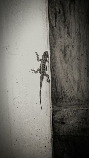 Animal Invasor Blackandwhite Black & White Lizard Taking Photos Check This Out Animal Photography Relaxing
