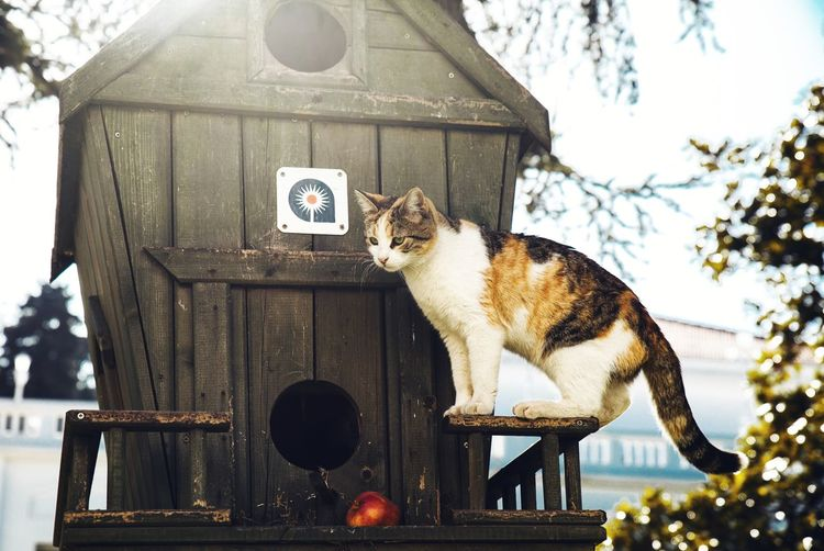 View of a cat sitting on wooden structure