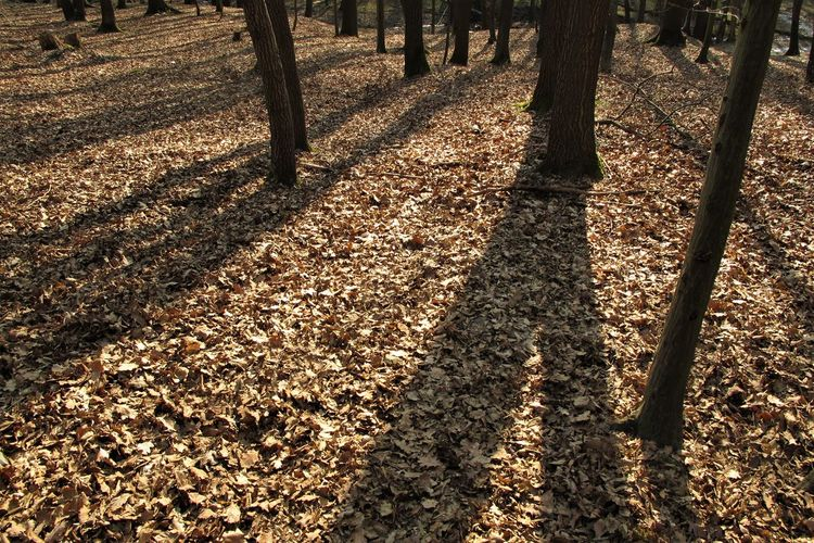 Czech Republic Autumn Change Day Fall Focus On Shadow Forest Growth High Angle View Land Leaf Leaves Nature No People Outdoors Shadow Sunlight Tranquil Scene Tranquility Tree Tree Trunk Trunk WoodLand