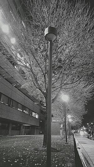 Black Background Phildelphia Light And Shadow Tree Beauty In Nature Holiday Spirit Lampost Illuminated InNorth🔴 Winter 6. ❄ Frostree.