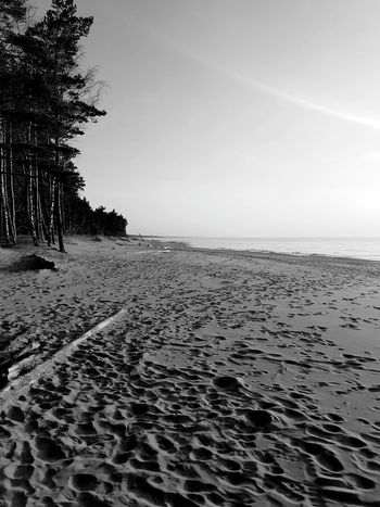 Black And White Tree Pine Tree Rampage  The San Sunset Sanset Water Sea Beach Sand Refraction Sky Horizon Over Water Landscape