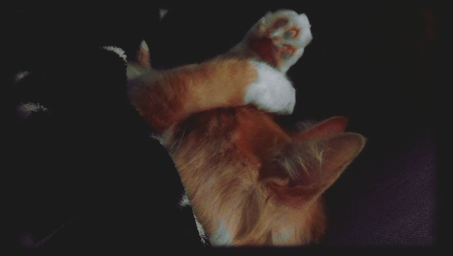 Cat Cute Pets Chat Miaou