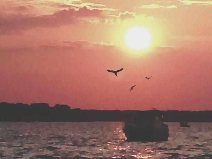 Sunset Clouds Birds Water Cedar Creek Lake Silhouette