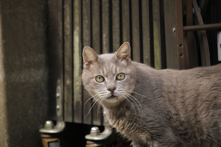 Domestic Cat Pets Domestic Animals Animal Themes Cats Of EyeEm Feline One Animal Looking At Camera Mammal Portrait Whisker No People Indoors  Day Close-up Collar