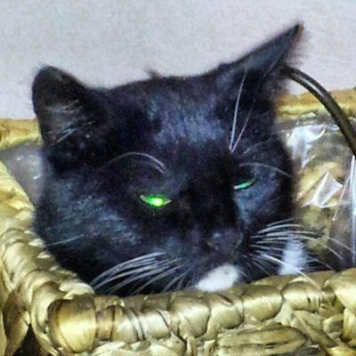 #cat #igers #igfamos #instgramm #instagood Cat Igers Instagood Igfamos Instgramm