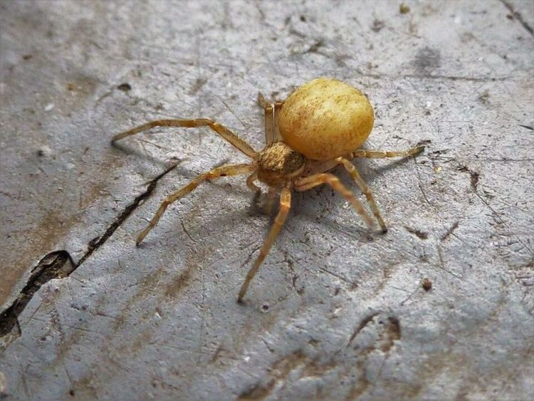 One Animal Animals In The Wild Spider Close-up No People Day Outdoors Nature Arachnid Arachnophobia
