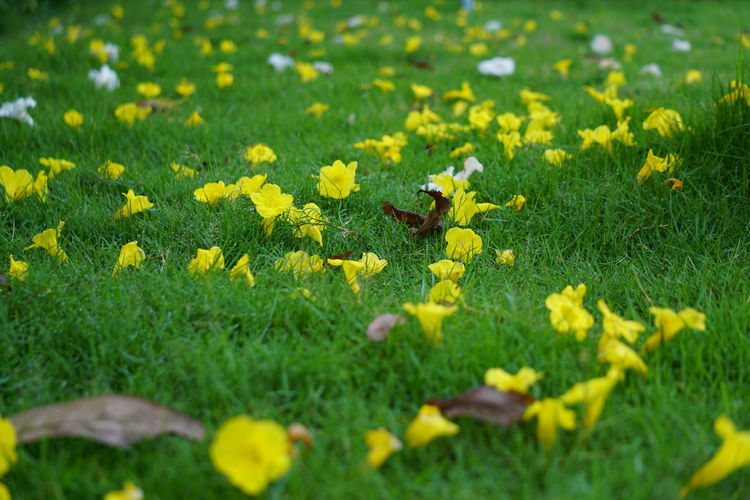 #Chennai #flowers #greengrass #Nature  #RajBhavan #randomfoodshots #summer