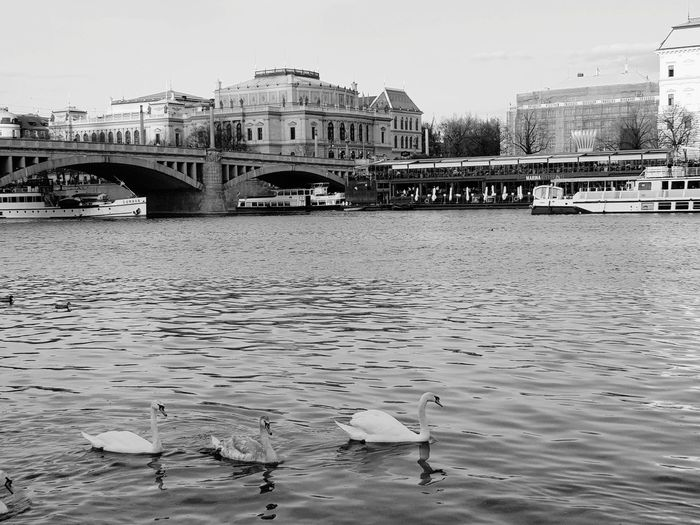 View of seagulls on bridge over river