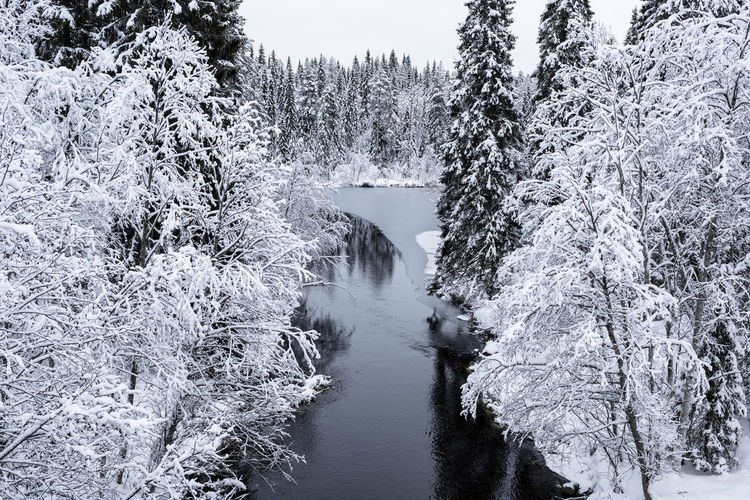 Snow covered plants by river
