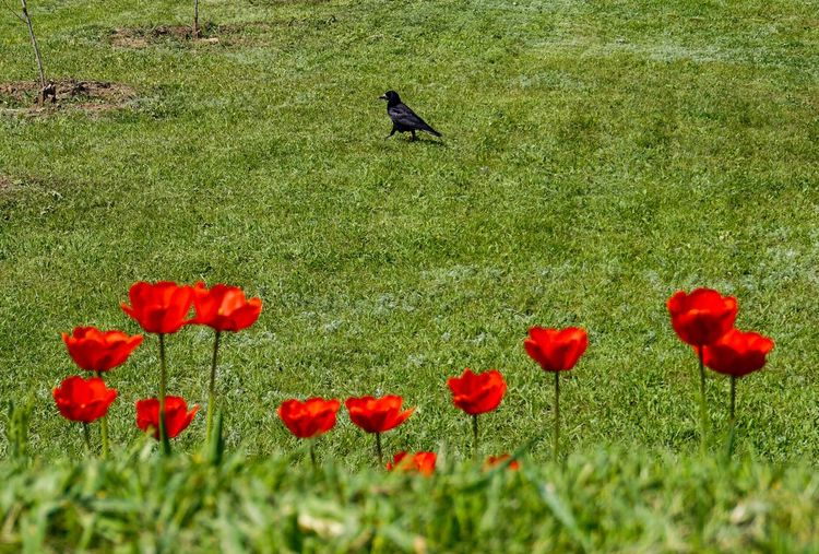View of red flowers on field