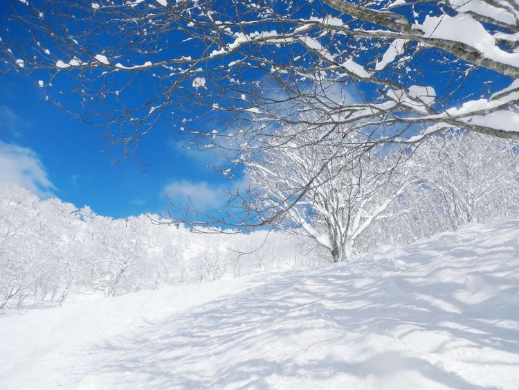 First Eyeem Photo Winter Snow Snowscape Blusky Niseko Rime 雪 雪景色 北海道 ニセコ 冬
