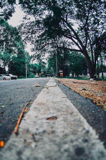 ถนน Plant Tree The Way Forward No People Transportation Day Direction Diminishing Perspective Architecture Street Surface Level Tranquility Nature Footpath Plant Part Road Outdoors Growth City Leaf